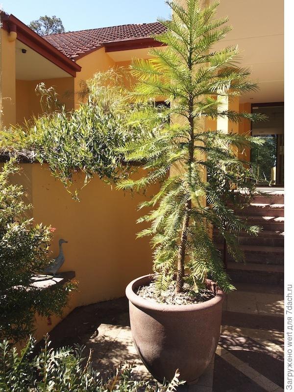 Австралийский сад