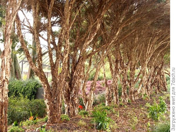 Сад в стиле натюрель