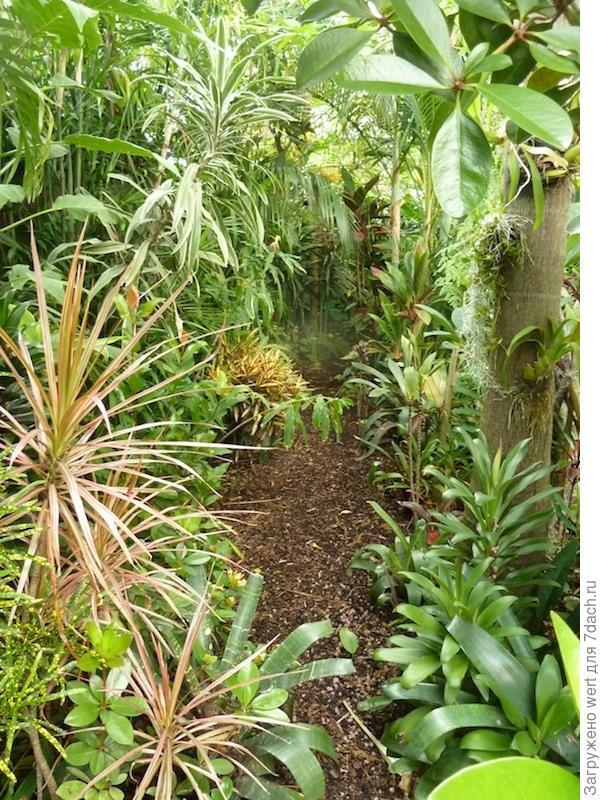 Уникальный сад в тропическом стиле