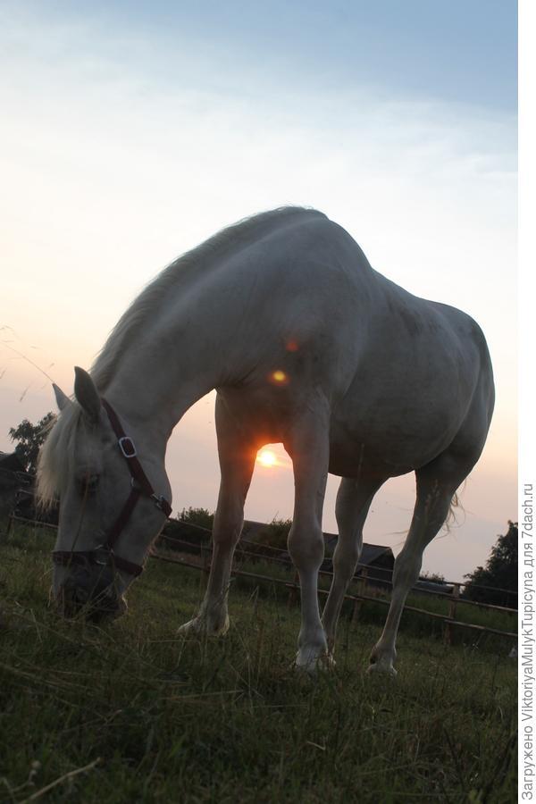 Вечерняя лошадь