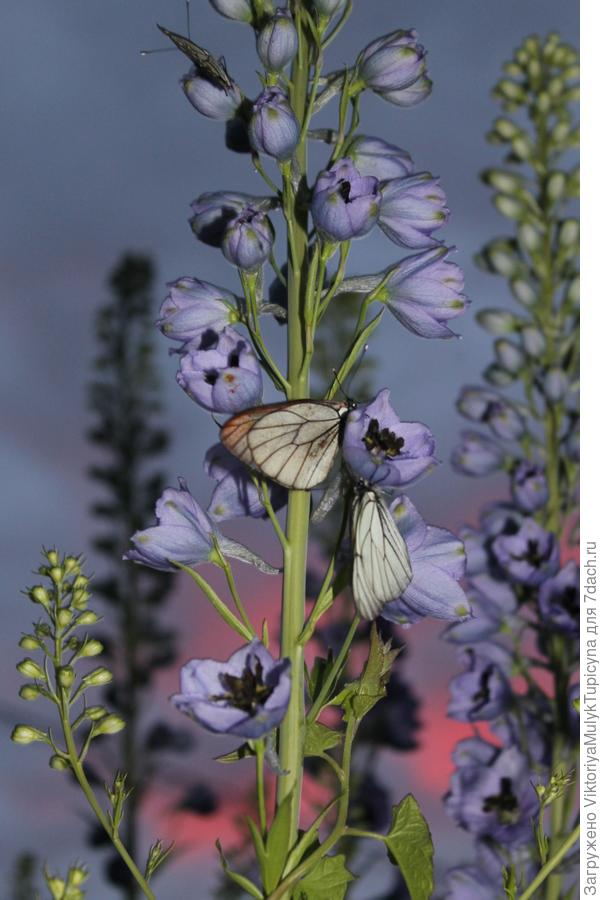 нашествие бабочек