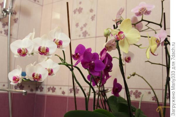 Орхидеи после замачивания в воде.