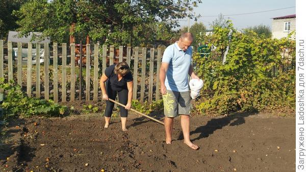 Посев сидератов - залог здоровья почвы