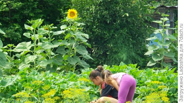 Детки-конфетки собирают урожай!)