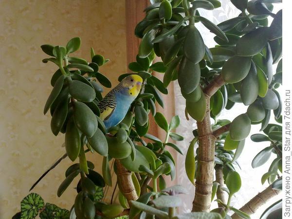 Попугайчики очень любят его! Цветочное дерево)