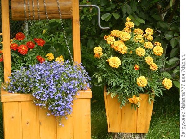 благоприятные цветы в доме фото