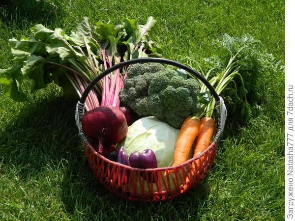 хозяйка с огорода домой принесла..капусту, свеколку, морковку..