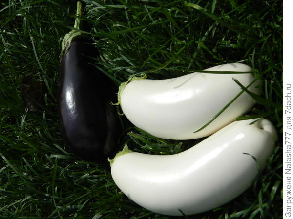 белые и черные