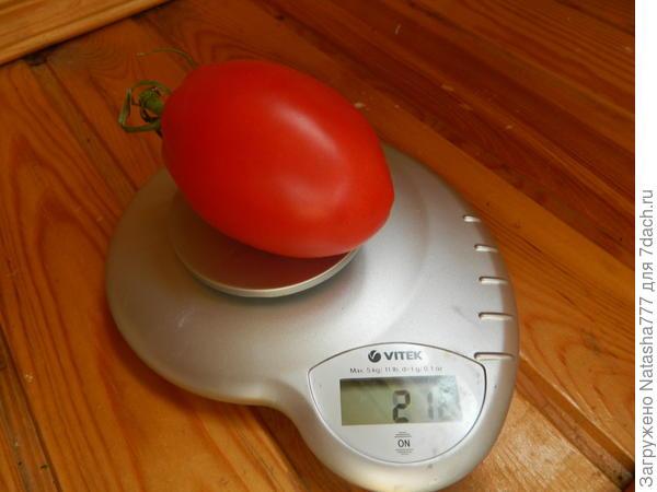 вес 216 грамм