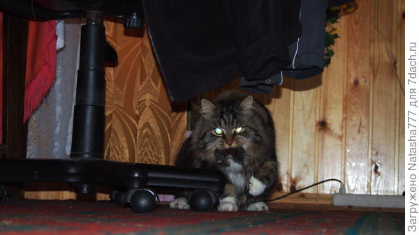 Поймал бедную мышку