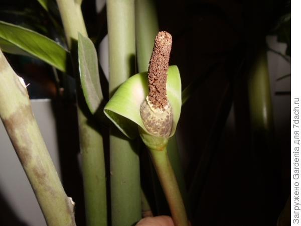теперь цветок так вот выглядит