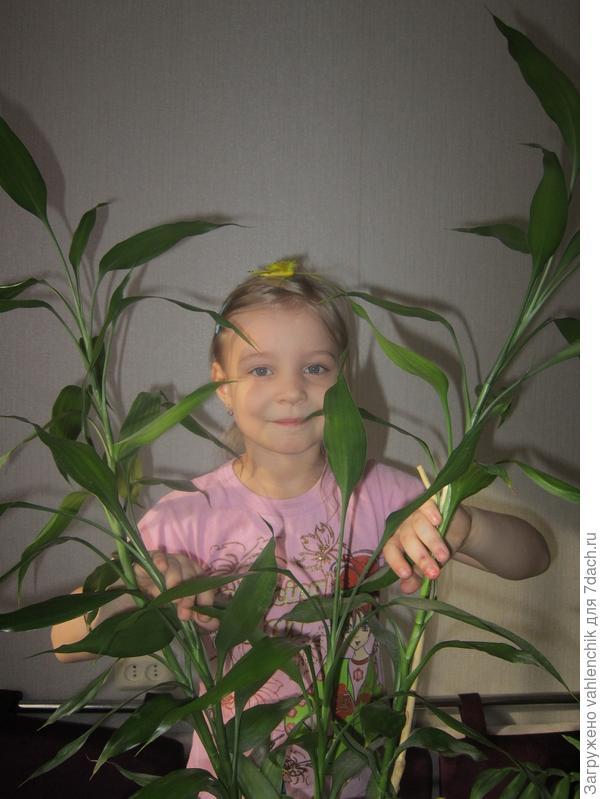Растения с интересными листьями