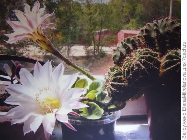 во время цветения