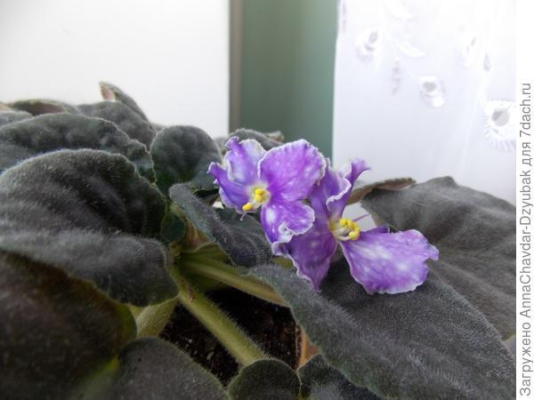 цветут
