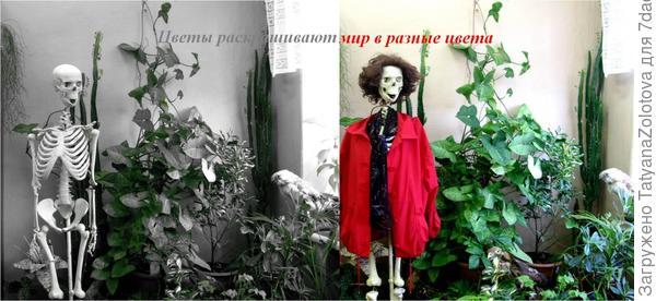 Сингониум — род многолетних вечнозелёных растений семейства Ароидные украшает то, что невозможно украсить