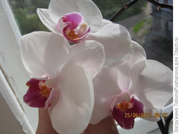 Орхидея, с неё всё началось )