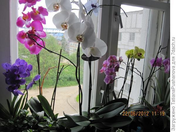 Моя коллекция орхидей