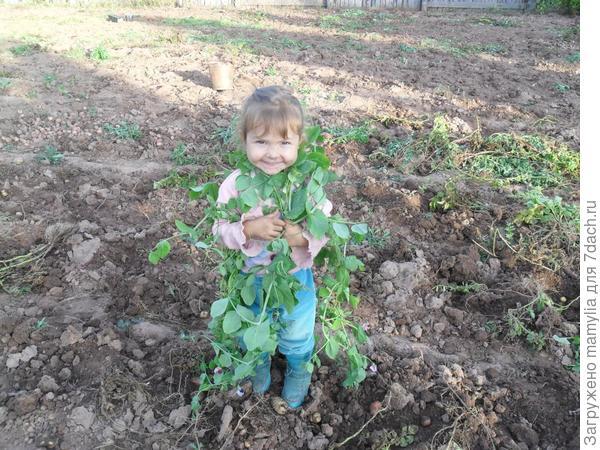 ребёнок  в траве