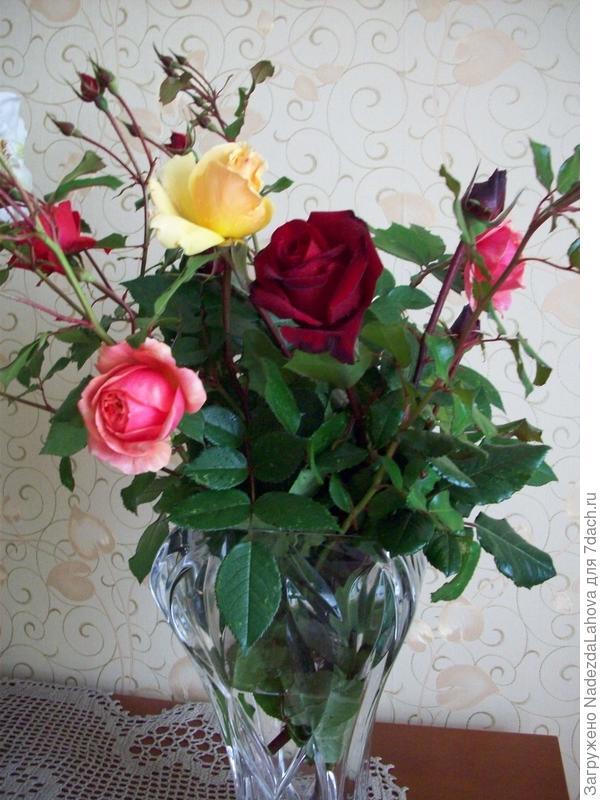 букет роз с моего розария последние срезанные перед заморзками