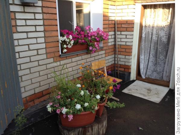 Цветочки у дома