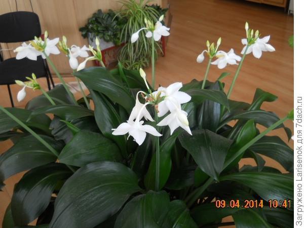цветем и благоухаем