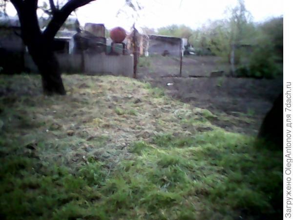угнетенная трава