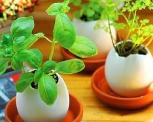 Яичные вазоны) Фото взято с сайта yayki.ru