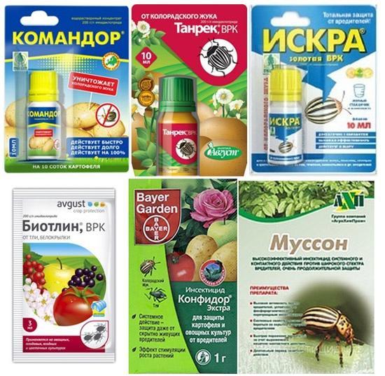Системные инсектициды. Фото с сайта u-mama.ru, автор не указан