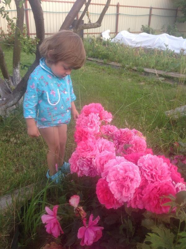 Очень ценим цветы, особенно розы