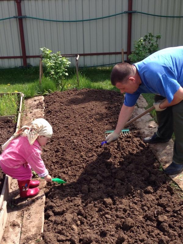 Помогаю дедушке посадить огурчики