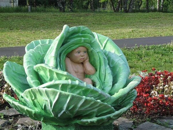Младенец в капусте, фото с сайта vorotila.ru
