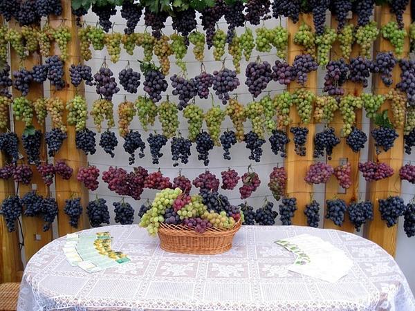 молдавский виноград, free-time.md