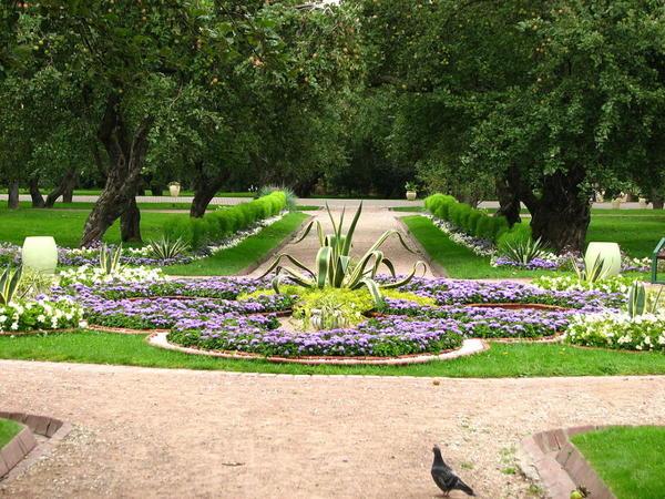 Клумба с низкорослым сортом агератума, фото с сайта   ru.wikipedia.org, автор Корзун Андрей
