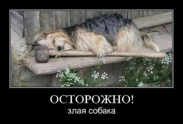 Осторожно, злая собака.  Фото с сайта dog-is-life.blogspot.com