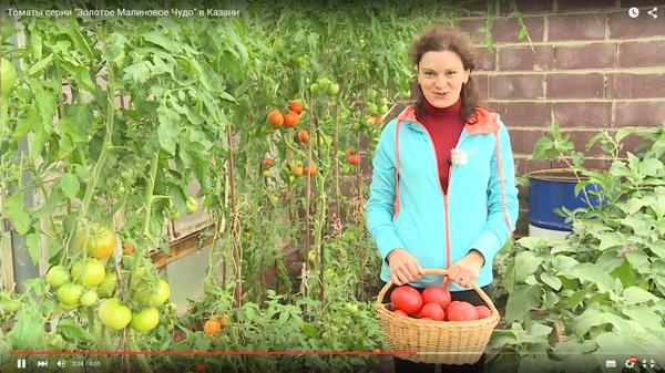 Самый большой помидор, Диана Джурабаева