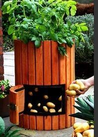 Выращивают картофель и так))