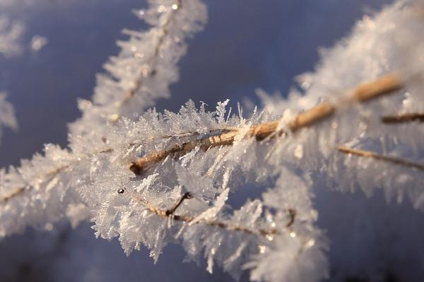Зима крупным планом