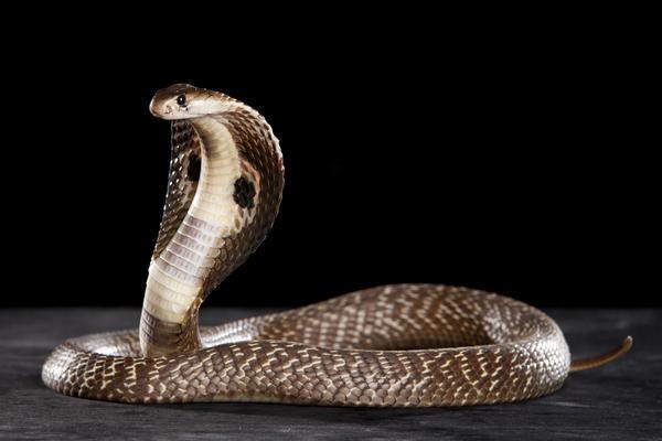 Символы дня: змея, шакал