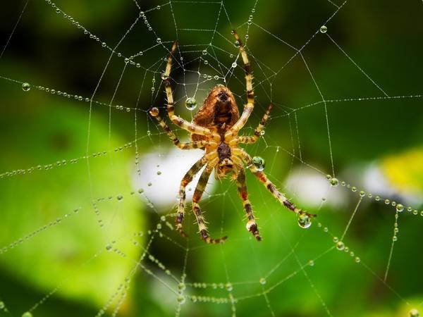 Символы дня: паук, сеть