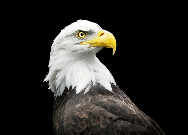Символ дня: орел