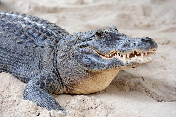 Символы дня: крокодил, химера, цербер, ехидна