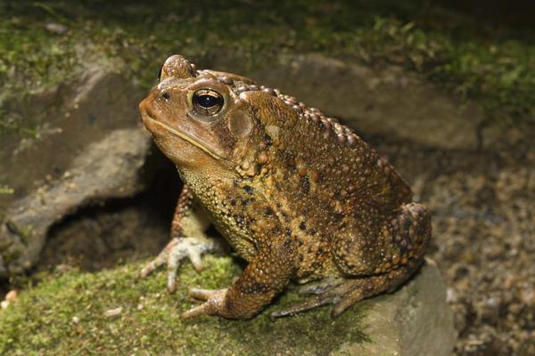 Символы дня: жаба, болото