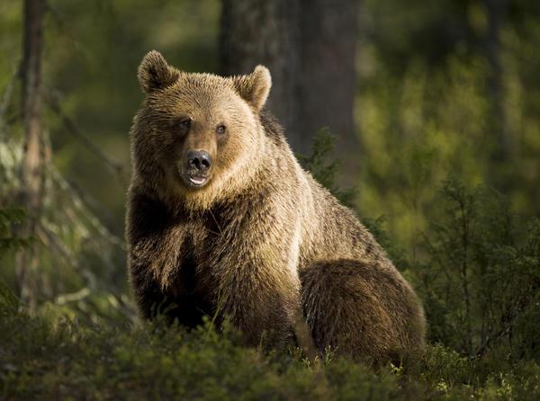 Символ дня: медведь