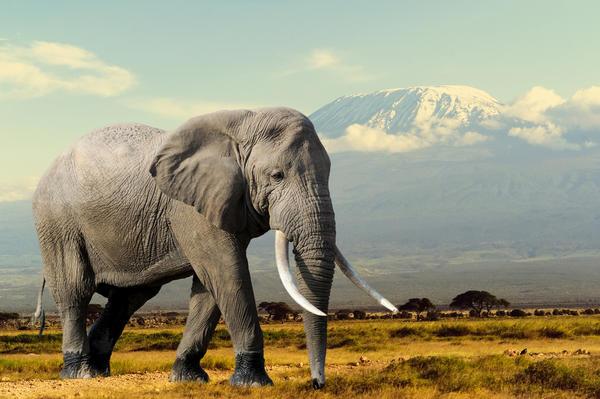 Символы дня: слон, ключ, свисток