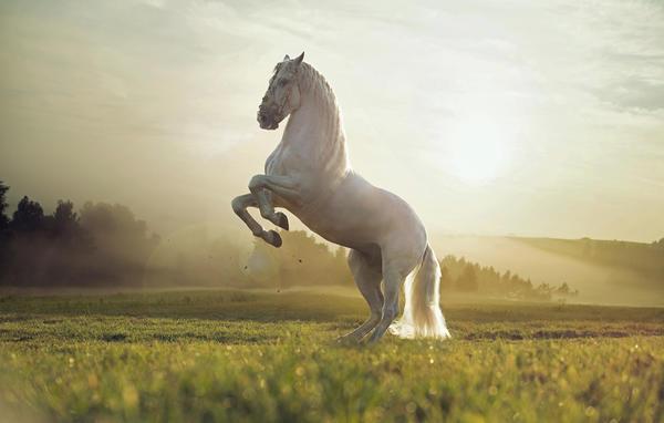 Символы дня: конь, табун, колесница, Пегас