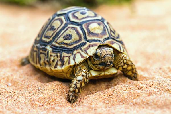 Символ дня: черепаха