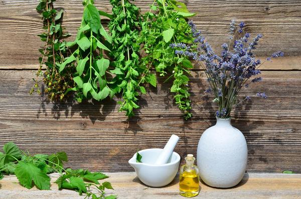 Какие лекарственные травы вы  собираете?