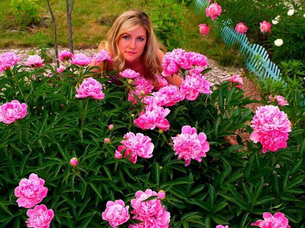 Наконец, цветут мои любимые пионы Автор фото: ZaharowaOlga (Захарова Ольга)