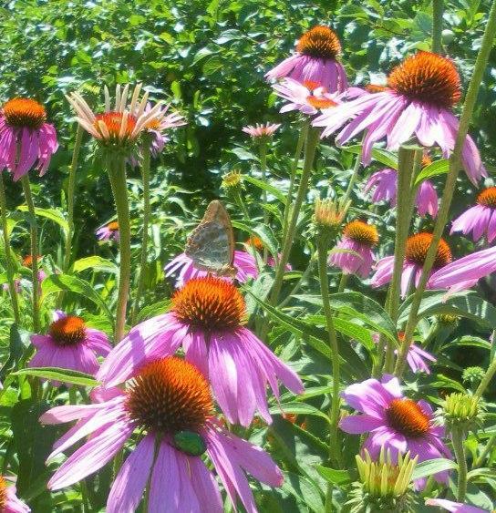 Самые прекрасные цветы моего сада!
