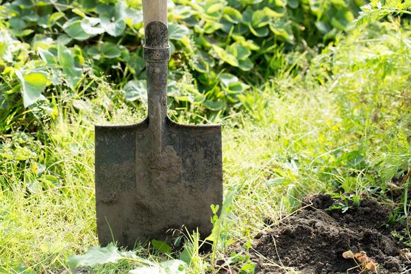Из-под какой культуры лучше всего брать землю для подготовки грунта под рассаду?